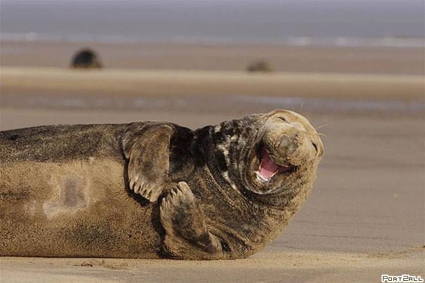 Умеют ли животные улыбаться?